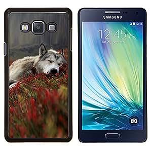 Stuss Case / Funda Carcasa protectora - Lobo gris en Campos - Samsung Galaxy A7 ( A7000 )