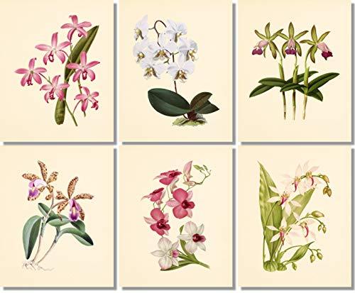 (Flower Wall Art - Vintage Orchids- Botanical Prints (Set of 6) - 8x10 - Unframed - Floral Decor )