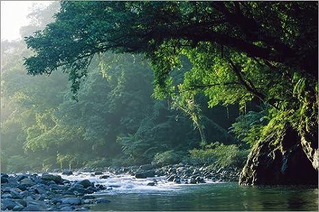 Posterlounge Alu Dibond 30 x 20 cm: A River Flowing in Rainforest de Tim Laman/National Geographic