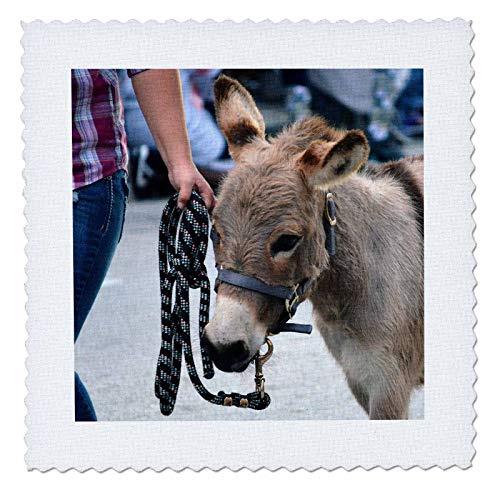 3dRose Susans Zoo Crew Animal - Miniature Donkey Head Halter Animal - 10x10 inch Quilt Square (qs_294155_1)