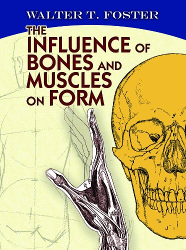 The influence of bones and muscles on form dover anatomy for the influence of bones and muscles on form dover anatomy for artists by fandeluxe Choice Image