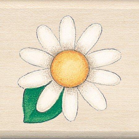 Daisy Flower ()