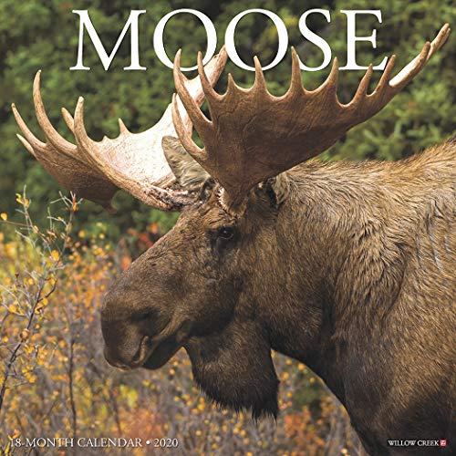 Moose 2020 Wall Calendar