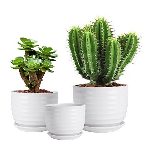 Vencer (3 Pack Modern Minimalist Ceramic Succulent Planter Pot - for All House Plants Flowers,Herbs,African - African House Plant Violet