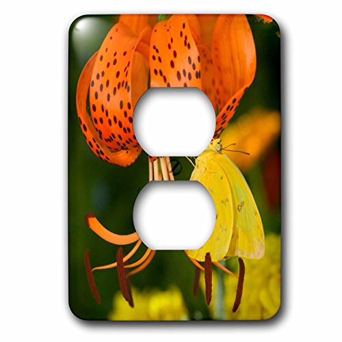 3dRose Danita Delimont - Butterfly - Sulphur Butterfly in the Phoebis family 01 - Light Switch Covers - 2 plug outlet cover (lsp_249851_6) -
