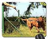 Gaming Mouse Pads,Mouse mat,Training Bordeaux Mastiff Dog Summer Nature Sunny