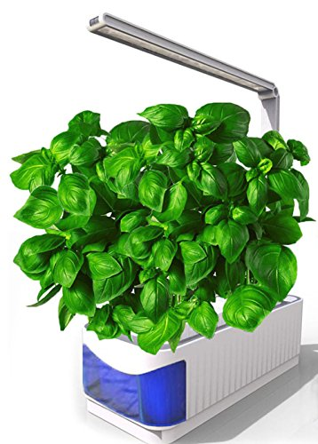 Growing Herbs Under Led Lights - 9