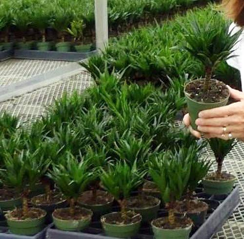1 Easy to Grow House Plant -