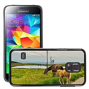 Hot Style Cell Phone PC Hard Case Cover // M00112430 Horses Stallion Wild Farm Mammal // Samsung Galaxy S5 MINI SM-G800