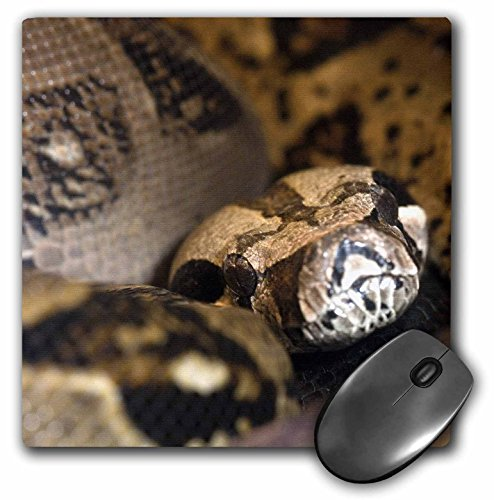 Boa constrictor snake - NA02 CZI0002 - Christian Ziegler - Mouse Pad, 8 by 8 inches (mp_83712_1)