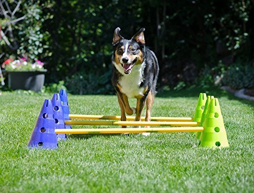 Ball Dynamics FitPAWS CanineGym Agility Kit