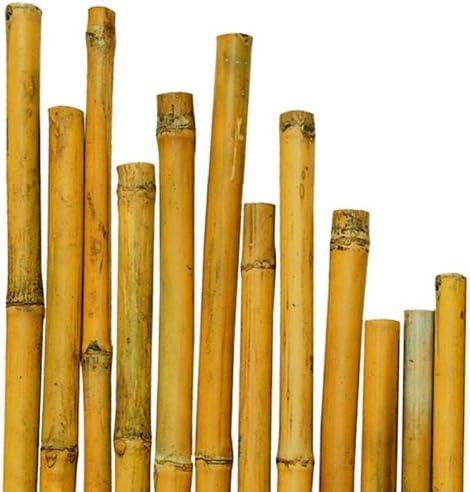 N ° caña Bamboo bambú 50 cm de diámetro, 150 x 20-22 mm para plantas, agricultura, orto, mobiliario, equipo, decoración: Amazon.es: Jardín