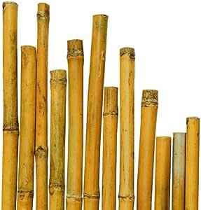 N ° caña Bamboo bambú 50 cm de diámetro, 150 x 20-22 mm para ...