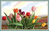 Northwest Art Mall Skagit Valley Washington Tulips Unframed Poster Print by Joanne Kollman, 11-Inch by 17-Inch
