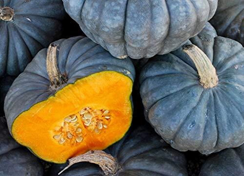Grey Pumpkin Seeds Volzskaya up to 20