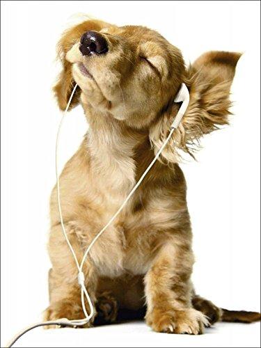 Artland Qualitätsbilder I Glasbilder Deko Bilder Barbara Helgason Junger Hund hört Musik über Kopfhörer Tiere Haustiere Hund Fotografie Weiß 80 x 60 x 1,1 cm A6ES