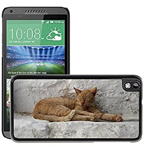 Hot Style Cell Phone PC Hard Case Cover // M00116347 Cat Kitten Kitty Pet Domestic // HTC Desire 816
