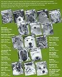 Barrons Books Gerbils Pet Owners Manual