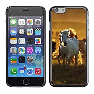 Graphic4You White Horse Animal Design Hard Case Cover for Apple iPhone 6