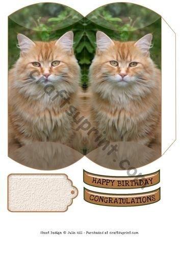 Cojín Pelo largo gato Julie Hill por caja: Amazon.es: Hogar