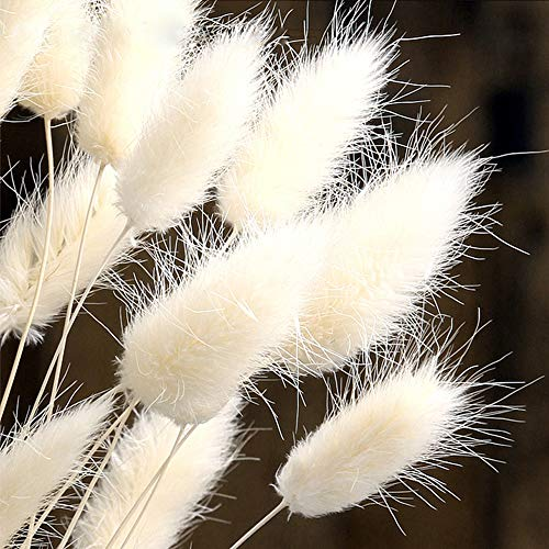 Color Life 110-120 Pcs Dried Natural Flowers Decoration  Pampas Grass, Dried Fox Tail, Rabbit Tail Grass, for Home, Party Themed Decorations ,18in(White) ()