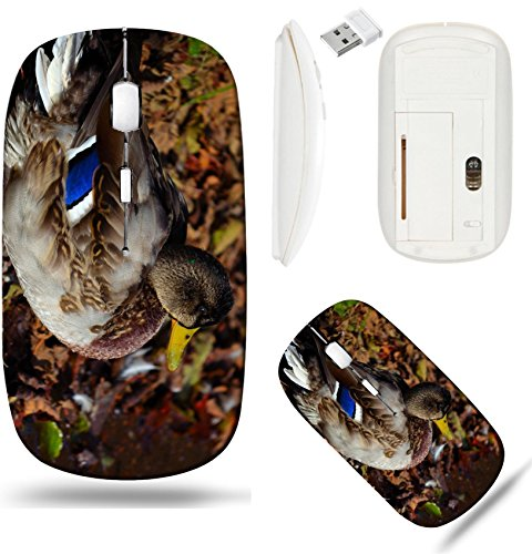 - Liili Wireless Mouse White Base Travel 2.4G Wireless Mice with USB Receiver, Click with 1000 DPI for notebook, pc, laptop, computer, mac book Beautiful male mallard duck sitting on old fallen leaves b