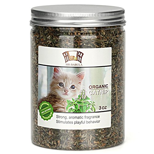 MR-BABULA Organic Catnip, Natural North American Variety, Selected Fresh Catnip Leaves & Bud 3OZ.