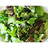 Organic Heirloom Mighty Micro Salad Medley 100+ seeds This combo of five baby leaf lettuce keep you coming back for multiple harvests this brand of seeds is sold by Greenlane Gardens and Solar Tech Canada ONLY!