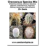 Oreocereus Cactus Species Mix 25+ Seeds