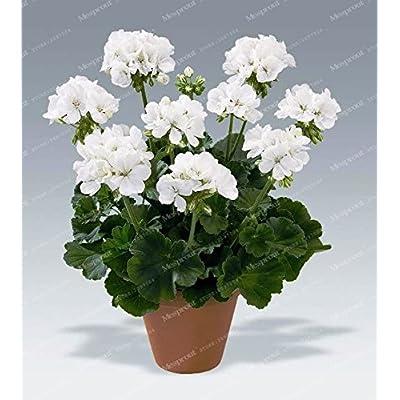 Kasuki 20Pcs/Bag Geranium Bonsai Flower Bonsai Perennial Flower Bonsai Pelargonium Peltatum Bonsai Potted Geranium for Home Garden - (Color: 22): Garden & Outdoor