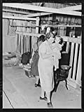 Near Shafter, California. Family from Oklahoma lives in old cow-barn and picks cotton for seventy-five cents a 100 pounds. During cotton strike