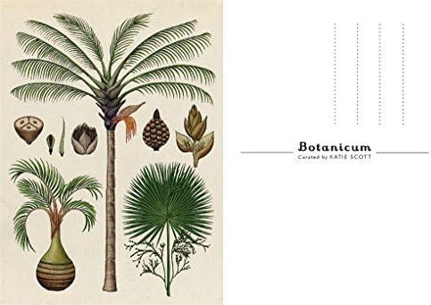 KEW GARDENS BELOW-GROUND EDIBLE PLANTS KATIE SCOTT BOTANICUM POSTCARD