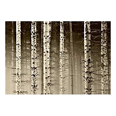 A Close Up View of a Birch Tree Forest - Wall Mural, Removable Sticker, Home Decor - 66x96 inches