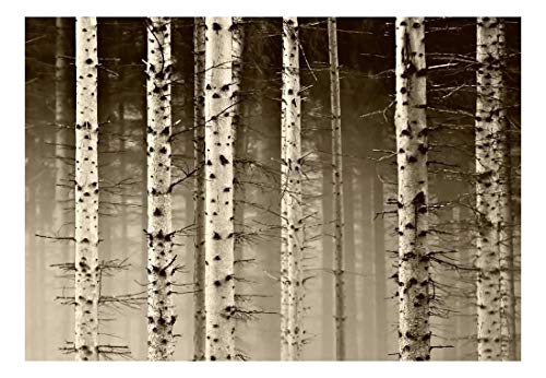 A Close Up View of a Birch Tree Forest Wall Mural