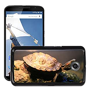 Hot Style Cell Phone PC Hard Case Cover // M00112533 Reptile Turtle Fresh Water Red Eared // LG Google Nexus 6