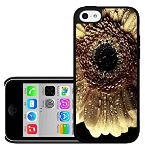Close up Pretty White Sun Flower Hard Snap on Phone Case (iPhone 5c)