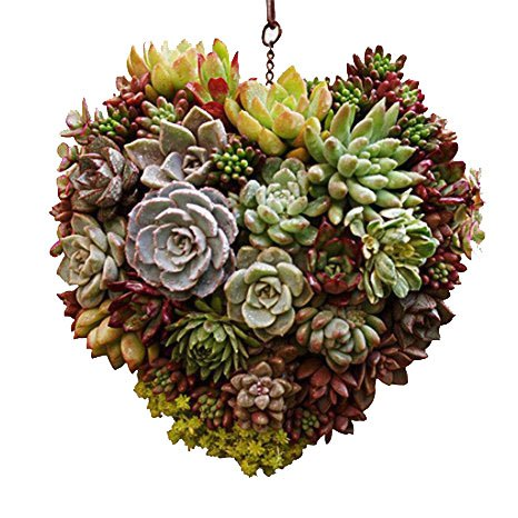 (Candyqueen 1Pcs Hanging Wall Succulent Planters Metal Wire Wreath Frame Succulent Pot Iron Hanging Planter Plant Holder Home Garden Decor (Heart))