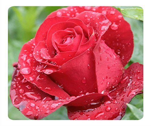 Custom Raindrops On Red Rose Gaming Mouse Pad - Durable O...