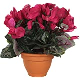 Mica Decorations 947211??Flowers Cyclamen pink by Mica Decorations