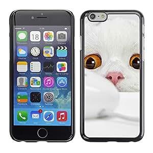 Vortex Accessory Carcasa Protectora Para APPLE iPHONE 6 PLUS ( 5.5 IN ) - Scottish Fold Cat White Kitten Angora -