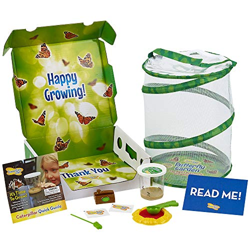 Butterfly Child Wings Kit - Insect Lore Deluxe Butterfly Garden with Live Cup of Caterpillars and Feeding Habitat Kit