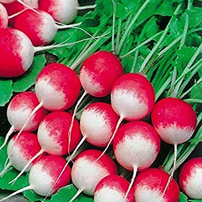 Halffle Seedhouse- Radish Seeds(Cherry Belle) Organic Vegetable Seeds Garden Balcony Plant Seeds : Garden & Outdoor