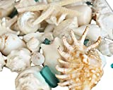 Tumbler Home Mix of Seashells with Sea Glass