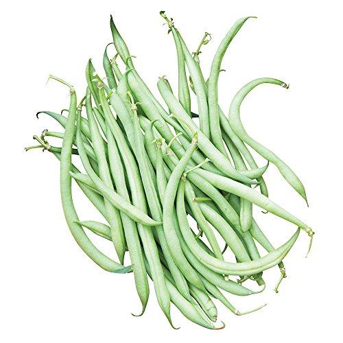 Burpee Mascotte Bush Bean Seeds 125 seeds