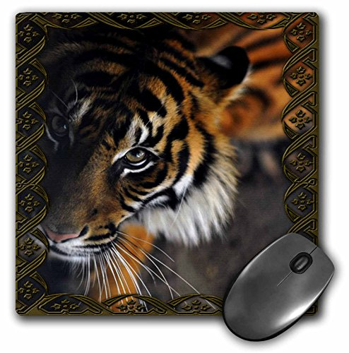 Bengal Beautiful Tiger - 3dRose LLC 8 X 8 X 0.25 Inches Beautiful Bengal Tiger Print and Frame Mouse Pad (mp_108066_1)