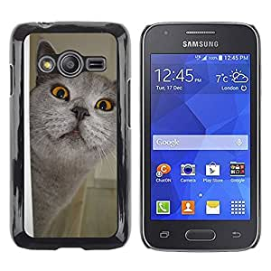 Super Stella Slim PC Hard Case Cover Skin Armor Shell Protection // M00144964 Cat View Adidas // Samsung Galaxy Ace4 / Galaxy Ace 4 LTE / SM-G313F