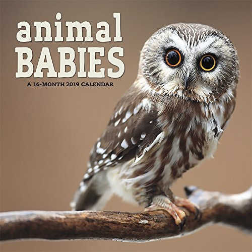 Animales bebés 2019 calendario