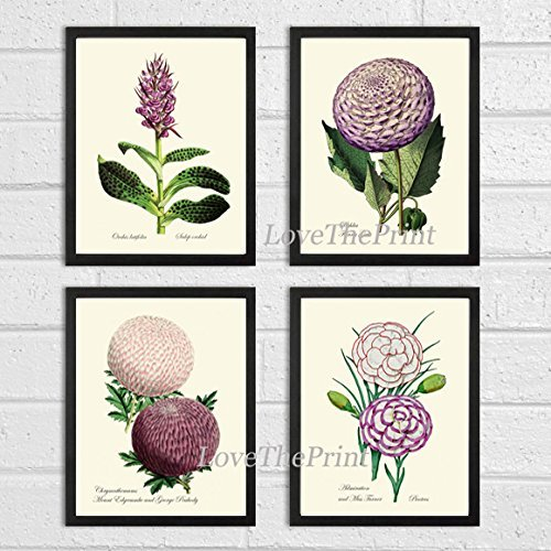 Growing Dahlia Flowers (Botanical Print Set of 4 Prints Antique Beautiful Orchid Dahlia Chrysanthemum Carnation Flowers Spring Summer Nature Illustration Home Room Decor Wall Art Unframed)