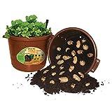 City Pickers Spud Tub Potato Grow Kit - Works Great on Decks and Patios - Low Maintenance & High Potato Yields