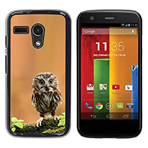 YiPhone /// Prima de resorte delgada de la cubierta del caso de Shell Armor - Cute Curious Mini Owl - Motorola Moto G 1 1ST Gen I X1032